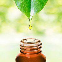 Plant cosmetics
